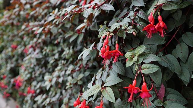 murs-exterieurs-végétal